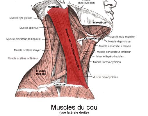 Rameur Exercices De Musculation
